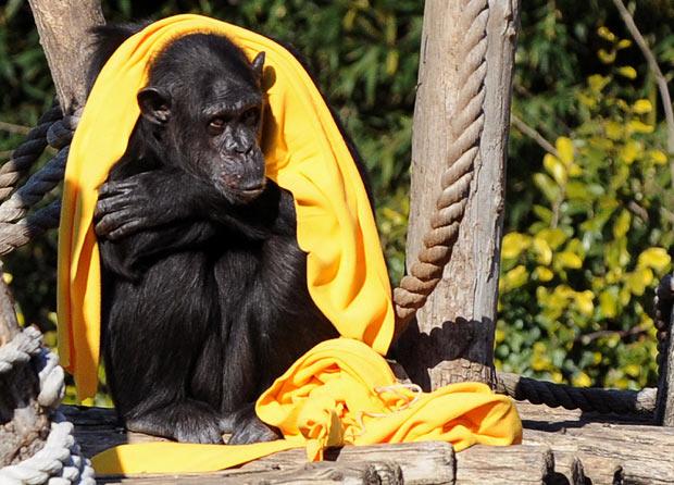 عکسهای حیوانات خوشگل