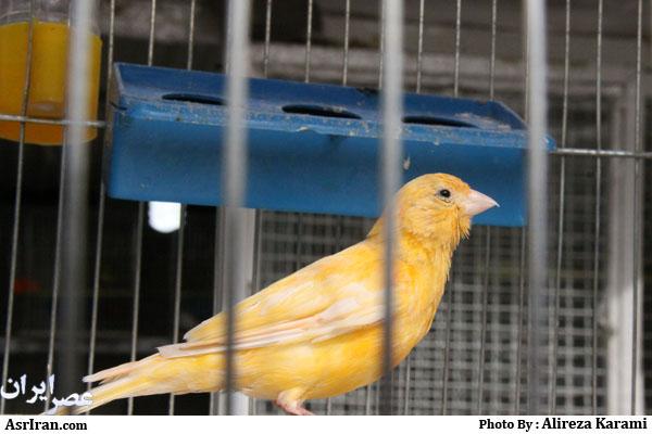 قیمت پرنده قوش Peregrine Falcon Clipart images