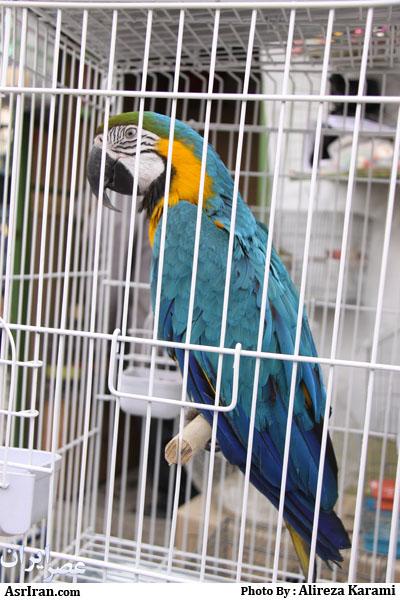 قیمت پرنده قوش عکس پرنده vs عکس های زیبا - PicArena Image Match - عکس پرنده pictures, عکس های زیبا pictures, عکس پرنده videos, عکس های زیبا vid