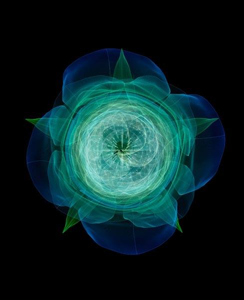تصاویری دیجیتالی از گیاهان واقعی www.TAFRIHI.com