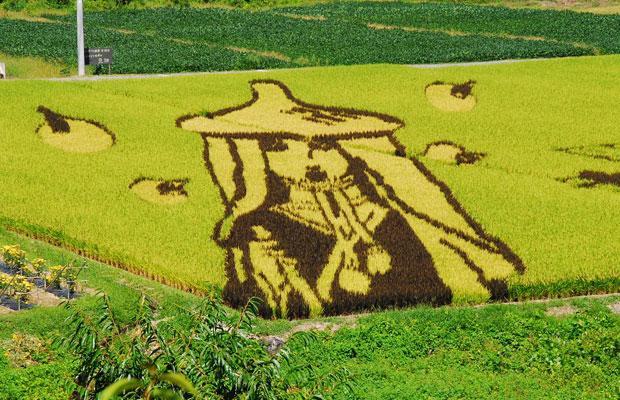 هنرنمایی در مزارع برنج (تصویری)