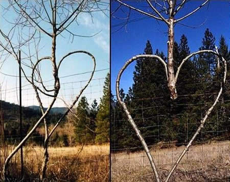 عکسهای طبیعت عجیب