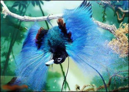 پرنده هایی که تا بحال ندیده اید