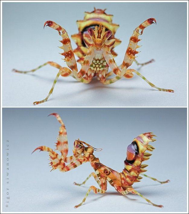 حشرات شگفت انگیز (تصویری) Tafrihi.Com