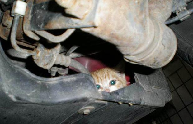 عکس هایی از دیدنی های امروز دوم مهر ماه ۱۳۸۸ Tafrihi.Com