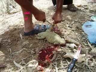 شکار و خوردن سوسمار در عربستان(گزارش تصویری) Tafrihi.Com