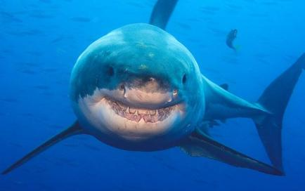 تصاویری زیبا از حیات وحش در زیر بستر اقیانوس ها http://www.sardarcsp.com