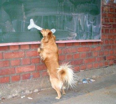 سرکار گذاشتن یک سگ (عکس)