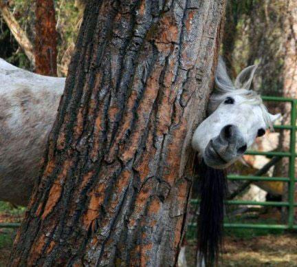 اسب مهربون (عکس)