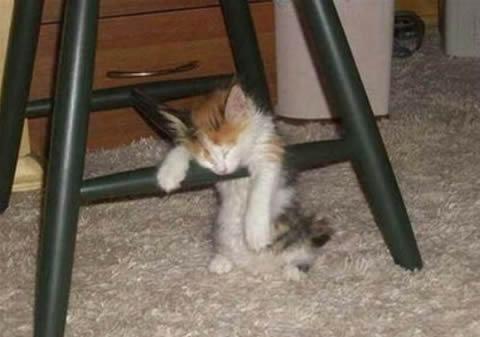 خواب بی دغدغه! (تصویری)