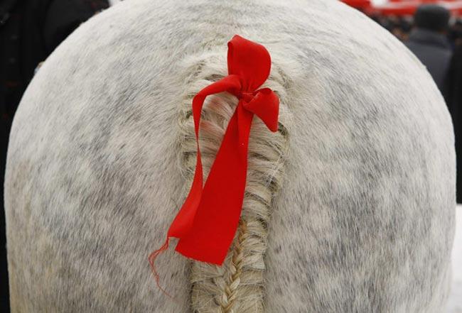 تزیین اسب در فستیوال رومانی