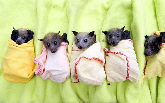 خفاش های سیل زده