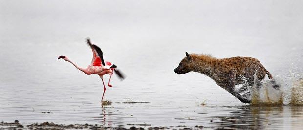 پرنده ها در طبیعت
