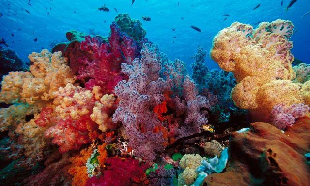 www.RangarangGroup.com | گروه اینترنتی رنگارنگ