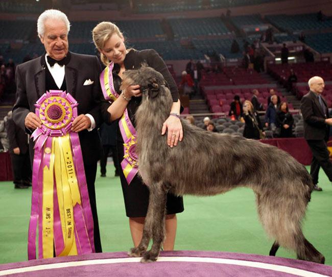 سگ اسكاتلندي