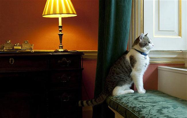 گربه خانگي نخست وزير بريتانيا