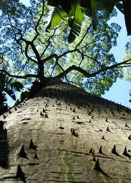حفاظت درختان از خود! (عکس)