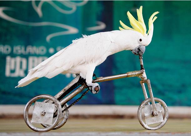 مسابقات المپیک پرنده ها در چین . - Bitrin.com