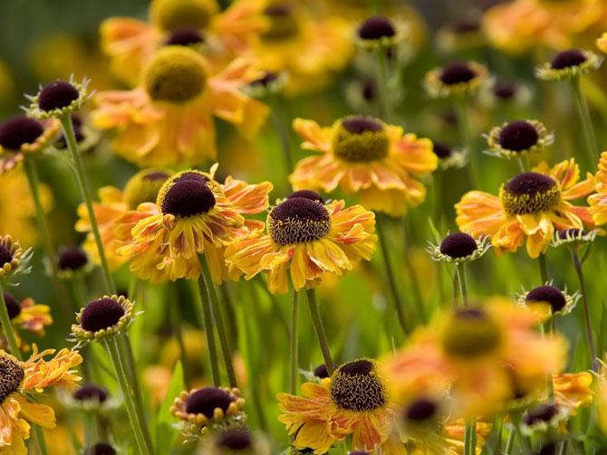 عکسهای گلهای بسیار زیبای بهاری