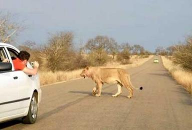 خطرات رانندگی در آفریقا (تصویری) www.TAFRIHI.com