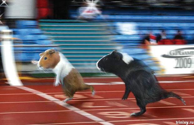 المپیک موش ها!(گزارش تصویری)