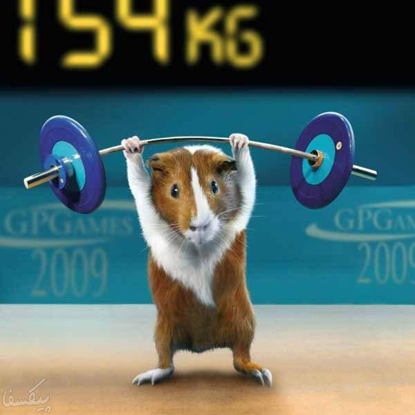 المپیک موش ها!(گزارش تصویری) www.TAFRIHI.com Fun