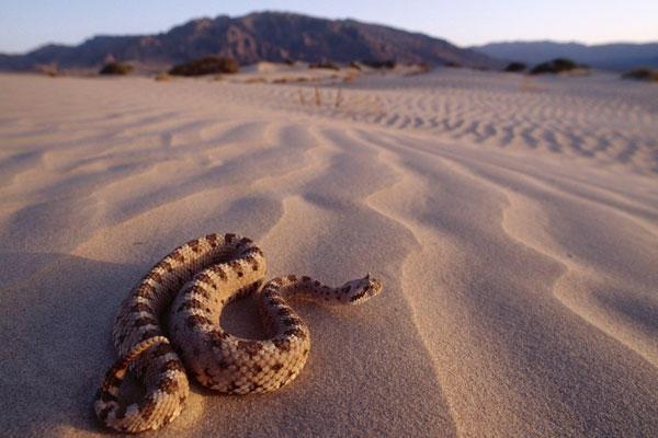دنیای مارهای سمی و کشنده (تصویری) www.TAFRIHI.com