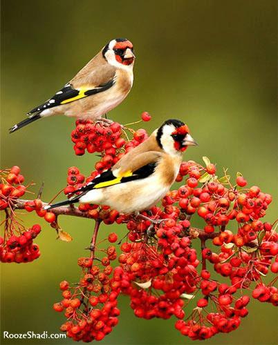 پرندگان همه ستايش و نيايش خدا مىكنند