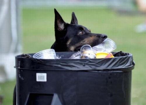 سگ نظافتچی (عکس)
