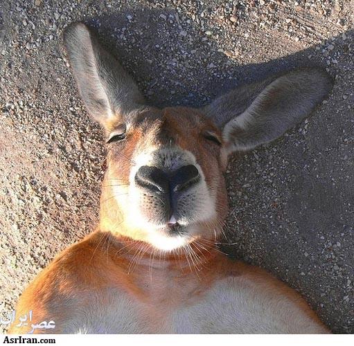 عکس جذاب و خنده دار از حیوانات