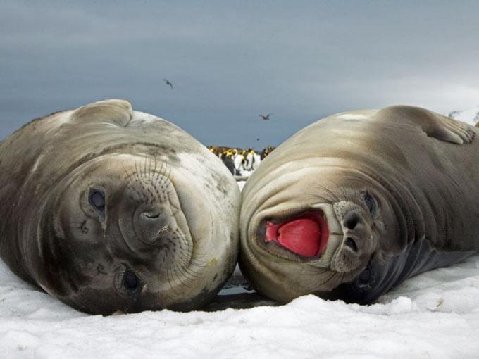 عکس های دیدنی و جالب و طنز از حیوانات و طبیعت