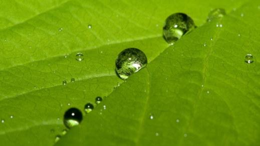 عکس های طبیعت سبز و دل انگیز و آرامش بخش