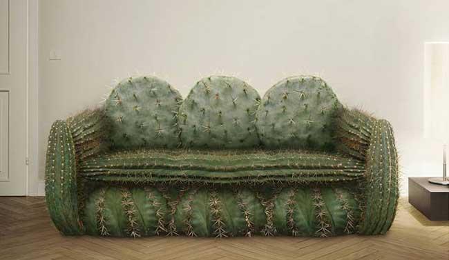 عکس از صندلی کاکتوسی با تیغ های تیز