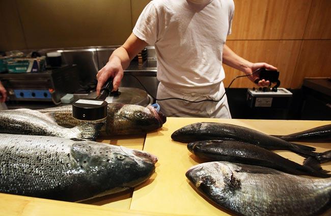آزمايش راديواكتيوي ماهي ها
