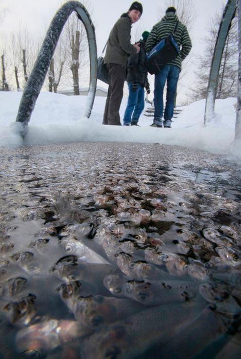 تصاویری دیدنی از تلاش ماهی ها برای نفس کشیدن!!