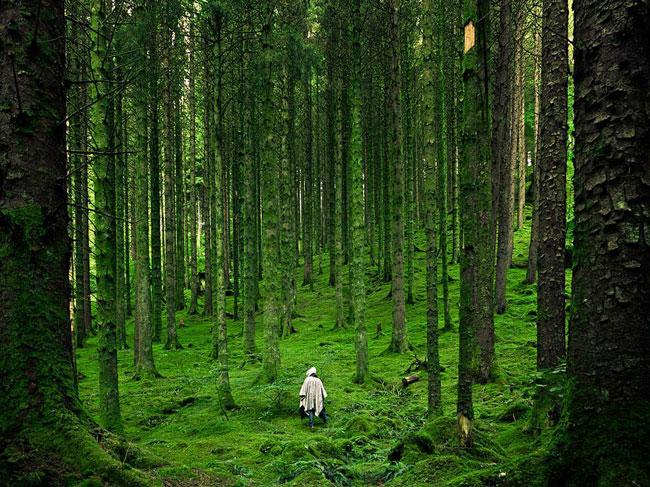 تصویر جنگل