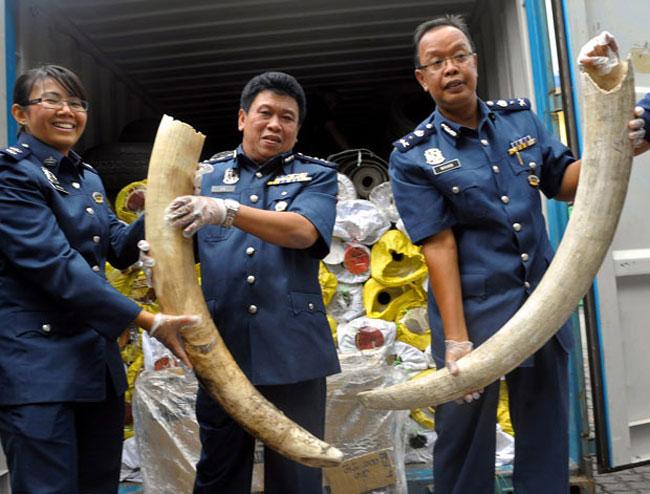 قاچاق عاج فیل
