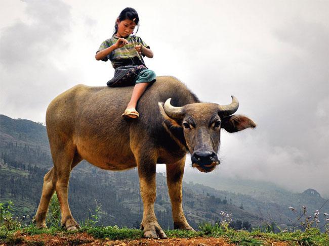 دختر ویتنامی