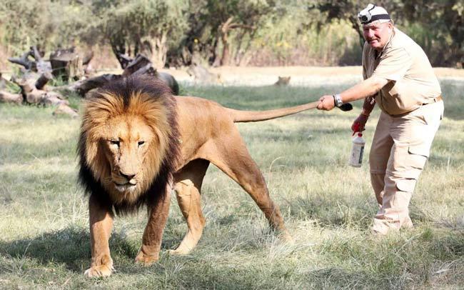 پارک شیرها