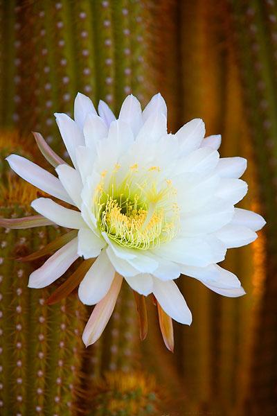 www.infopanel.ir  |  گل  Flower