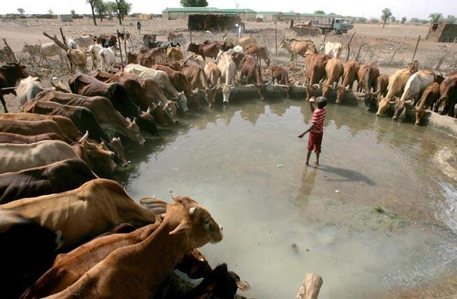 حوضچه روستایی