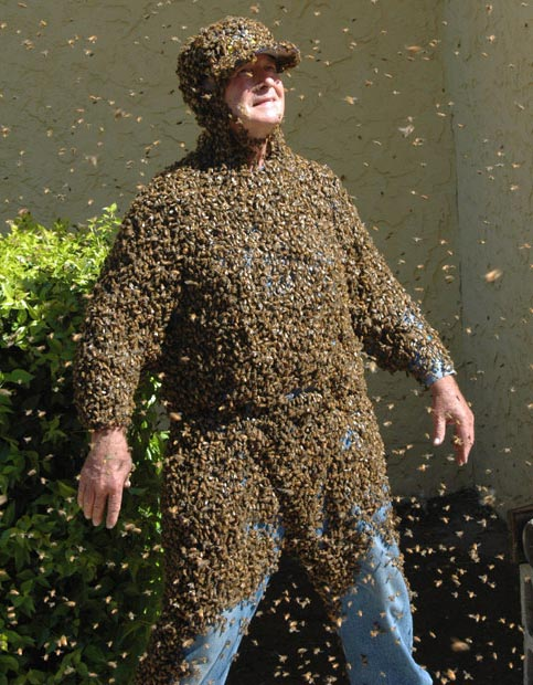 نمایش زنبورها