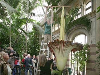 بزرگترین گل دنیا
