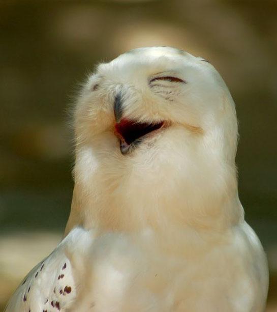 خنده جغد