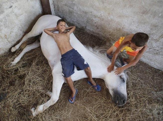 بازی با اسب
