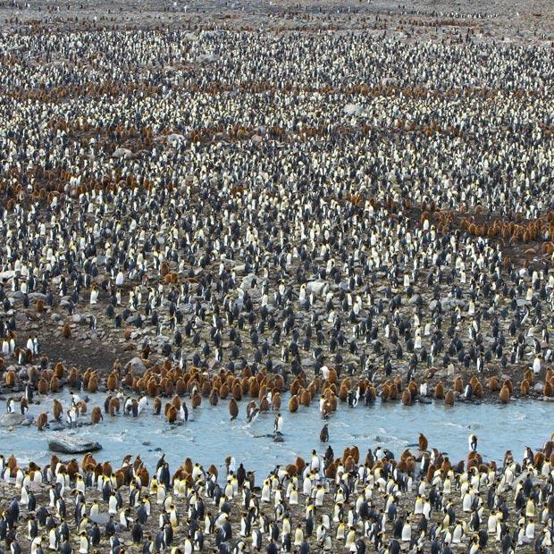 تجمع پنگوئن ها