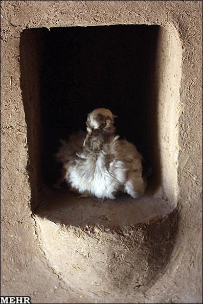 کبوترخانه