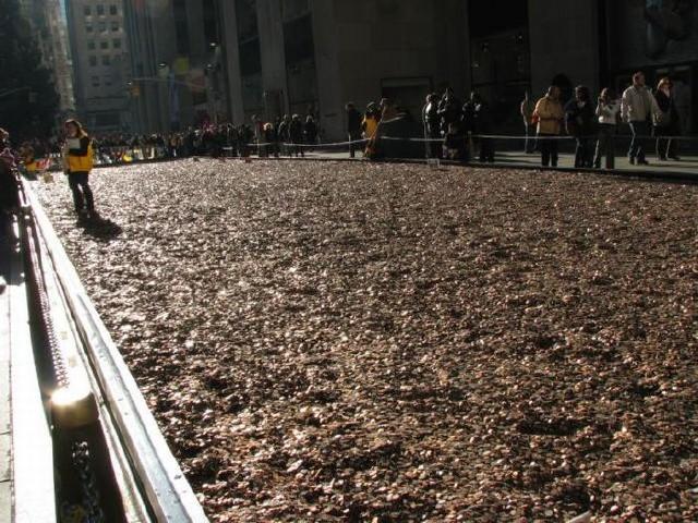 فرشی از یکصد میلیون سکه