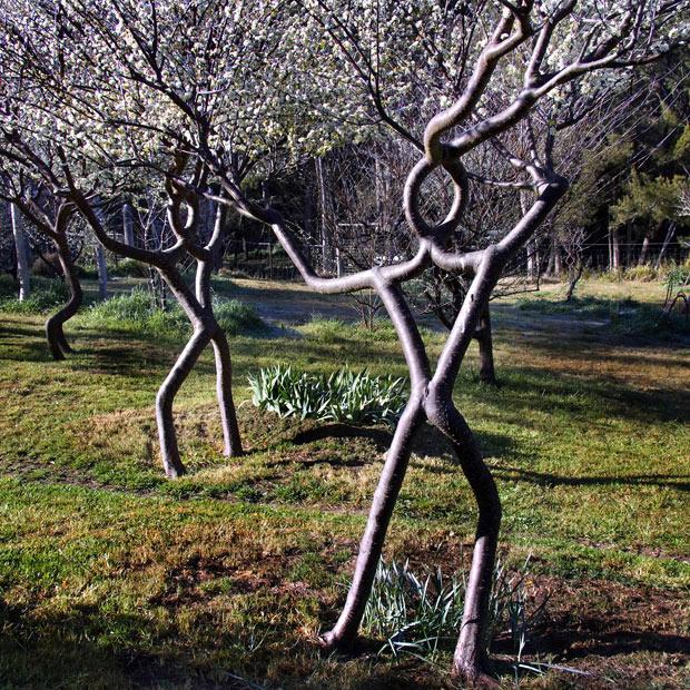 درختانی شبیه به انسان
