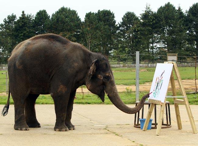 فيل نقاش